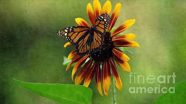 Sunflower Landing by Paul Wilford