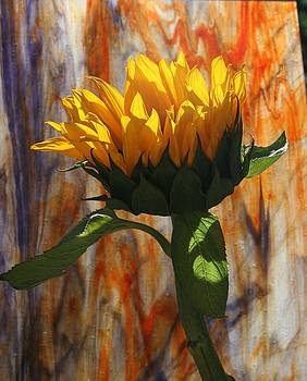 Sunflower by Leslie Sims