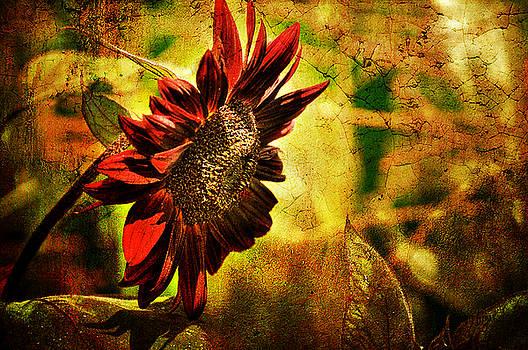 Lois Bryan - Sunflower