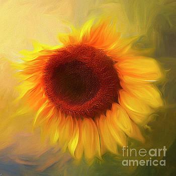 Sunflower Love 2 by Darren Fisher