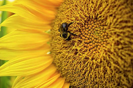 Sunflower Macro by Tammy Chesney