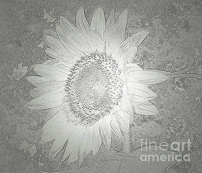 Sunflower Metallic Silver Glow by Donna Brown