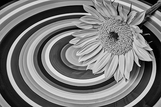 Sunflower On Circle Plate Black And White by Garry Gay
