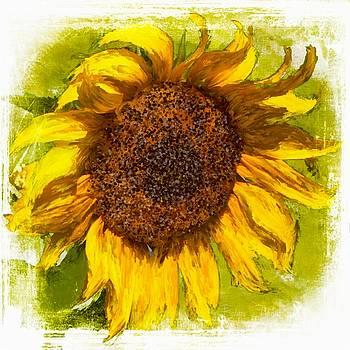 Sunflower Power by Barbara Chichester
