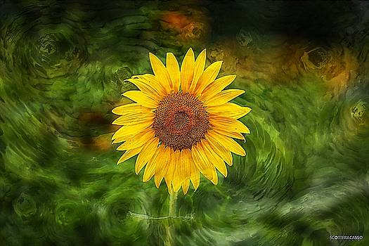 Sunflower Power by Scott Fracasso