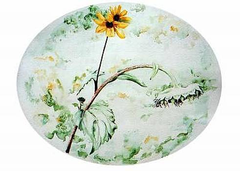 Sunflower Sag by Kris Killman