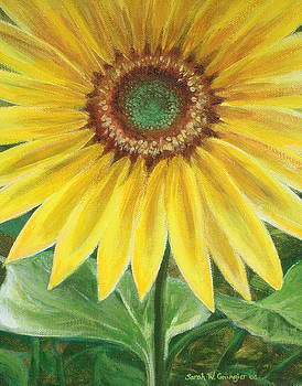 Sunflower by Sarah Grangier