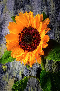 Sunflower Secrets by Garry Gay