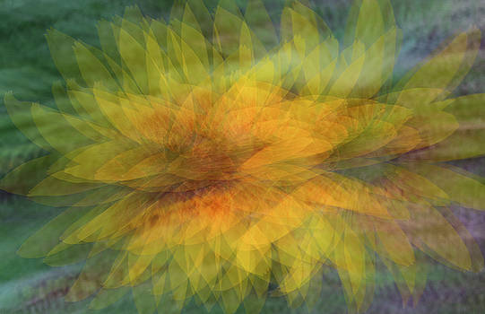 Sunflower Shimmy by Deborah Hughes