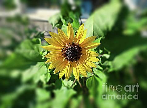 Felipe Adan Lerma - Sunflower Smile