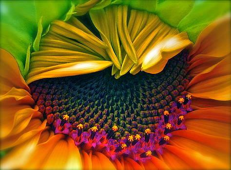 Gwyn Newcombe - Sunflower Smoothie
