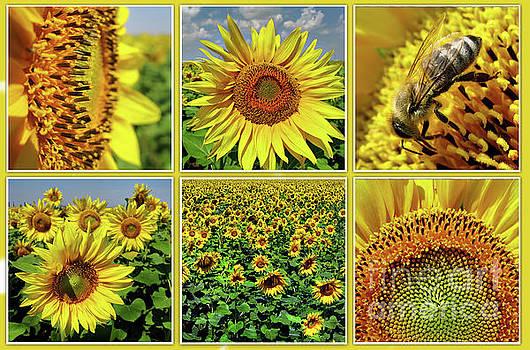 Sunflower Story - Collage by Daliana Pacuraru