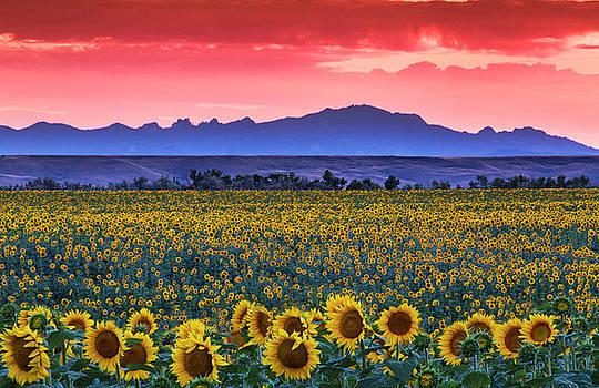 Sunflower Sundown by Evan Ludes