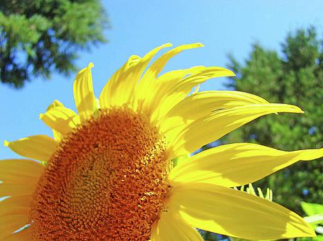 Baslee Troutman - SUNFLOWER Sunlit Art Print Canvas Sun Flowers Baslee Troutman