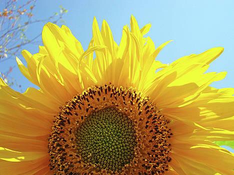 Baslee Troutman - SUNFLOWER Sunlit Sun Flowers Giclee Art Prints Baslee Troutman