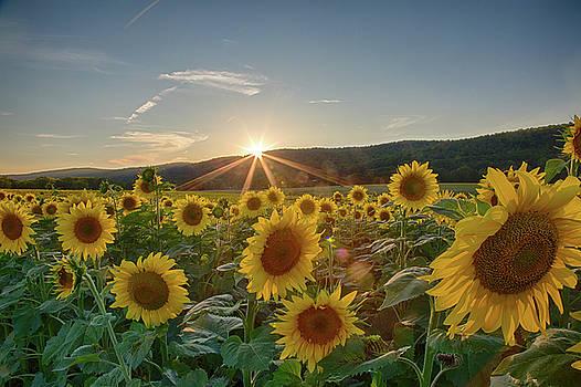 Sunflower Sunset by John Dryzga