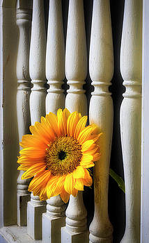 Sunflower Through Window Frame by Garry Gay