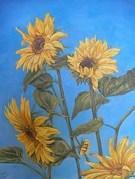 Sunflower by Travis Day