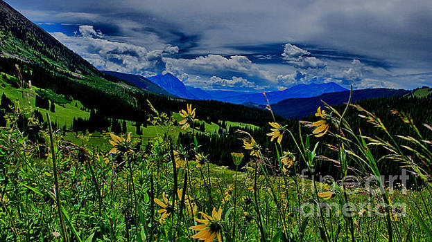 Sunflower View by Nancy Yuskaitis