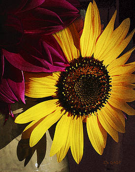 Sunflower with Dahlia by Ed A Gage