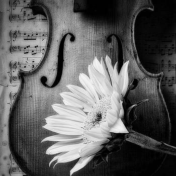 Sunflower With Old Violin by Garry Gay