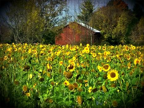 Sunflowers and Barn by Michael L Kimble