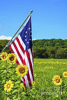 Regina Geoghan - Sunflowers and Betsy Ross Flag