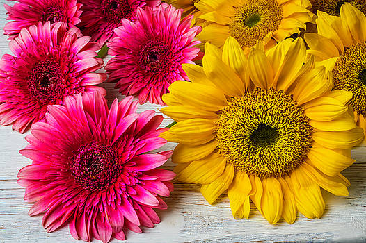 Sunflowers And Pink Gerbera Daises by Garry Gay