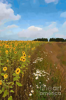 Sunflowers by Andrew Michael