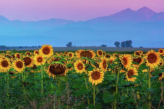Sunflowers At Dawn by John De Bord