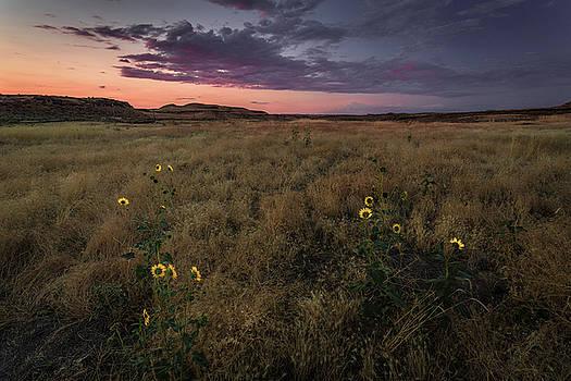 Rick Strobaugh - Sunflowers at Sunset