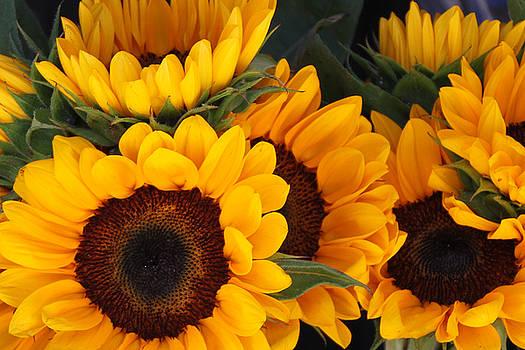 Sunflowers by Donna Betancourt