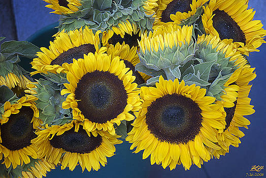 Sunflowers by Kenneth Hadlock