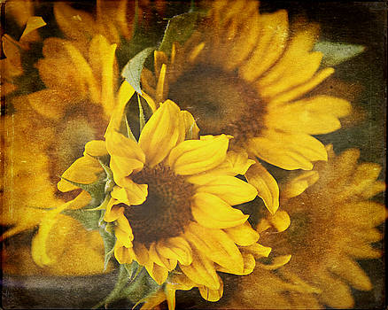 Lisa Russo - Sunflowers