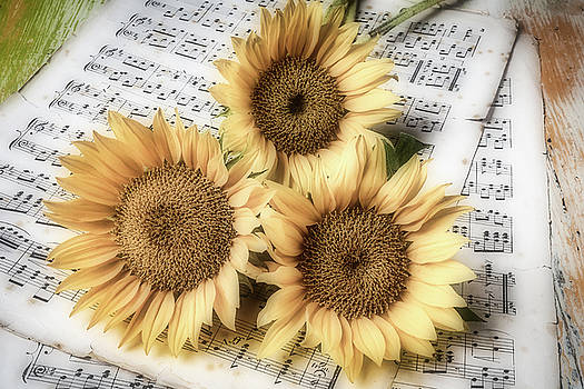 Sunflowers On Sheet music by Garry Gay