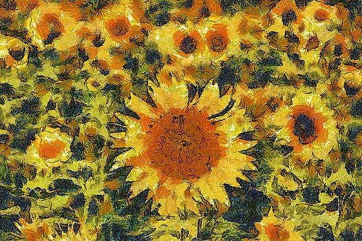 Sunflowers by Shubhadip Ghosh