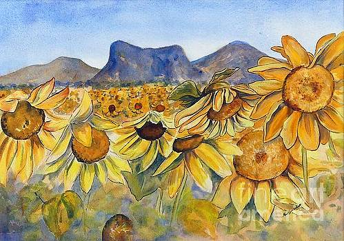 Sunflowers Springsure, Queensland by Ryn Shell
