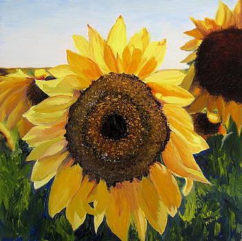 Lea Novak - Sunflowers Squared