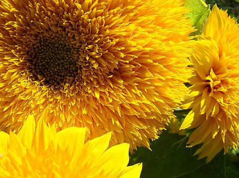 Baslee Troutman - Sunflowers Yellow Orange Floral art