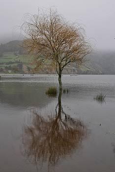 Sunken Tree by Steffani Cameron