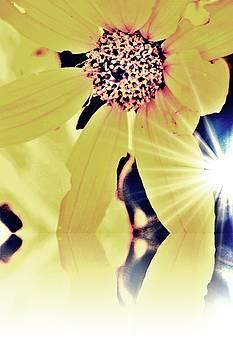 Sunlight Creeping Through by Ashley Vaughn
