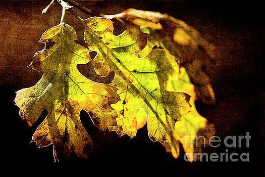 Sunlight Filtered Through Oak Leaves by Pamela Moran