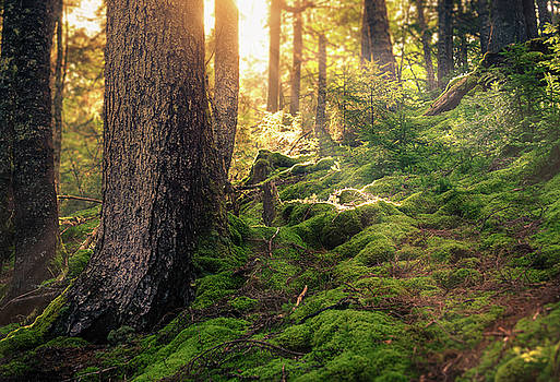 Sunlight in the Forest by Tracy Munson