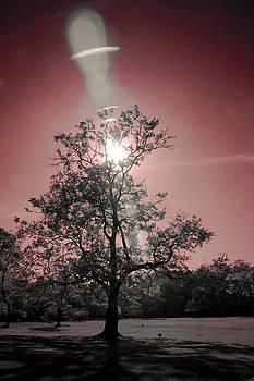 Sunlight by Mario Bennet