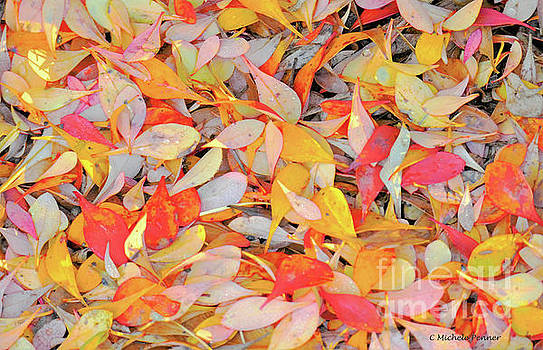 Sunlight on Barberry Leaves by Michele Penner