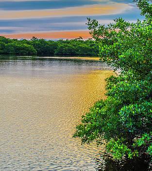 Sunlight On The Marsh by Steven Ainsworth