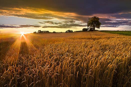Debra and Dave Vanderlaan - Sunlight on the Wheat Fields