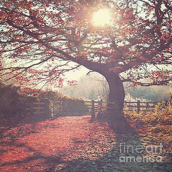 Sunlight shines through tree by Lyn Randle