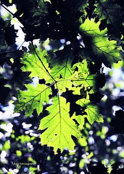 Kay Lovingood - Sunlight Through the Leaves