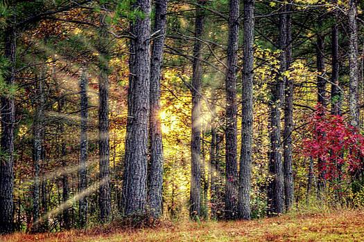 Barry Jones - Sunlight Through The Pines